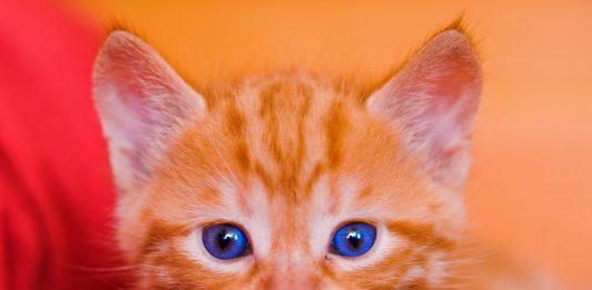 Mjaaaau! Denne katten er verkeleg søt. Runde trekk, sjølv om øyrene er ganske så spisse. Foto: Tambako The Jaguar/Flickr